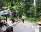Tree Removal Services