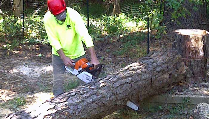 Pecan Bbq Cooking Wood Wake Forest North Raleigh Tree