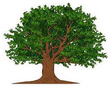 Andrew's Tree Pros - Serving Wake Forest and Surrounding Areas