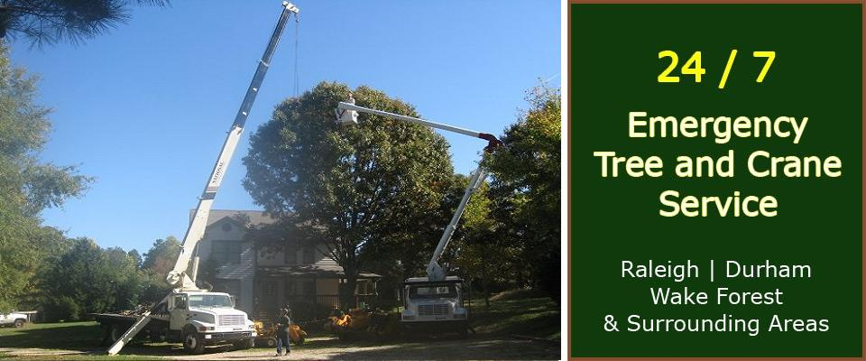 Raleigh Tree Service: Tree Cutting  Removal – Raleigh, Wake Forest ...