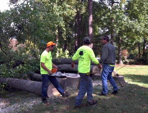 Tree felling, topping, and rigging…