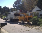 andrews-tree-service