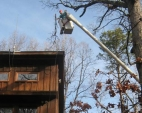 tree-trimming-and-pruning