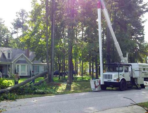 Emergency Tree Damage Services