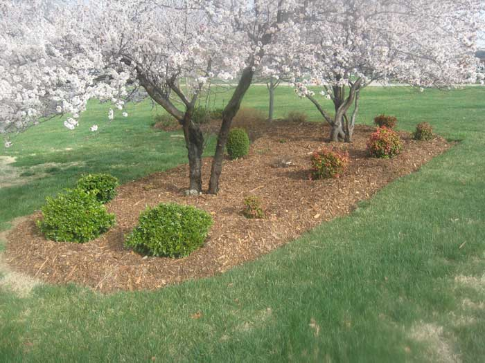 Andrew's Tree Pros - For Sales and Free Estimates please call: 919-727-6188