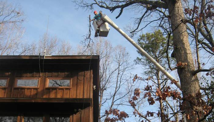 Andrew's Tree Pros provides professional tree trimming, thinning, pruning and removal services.