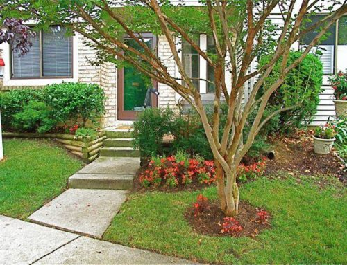 Caring for Crepe Myrtle Trees…