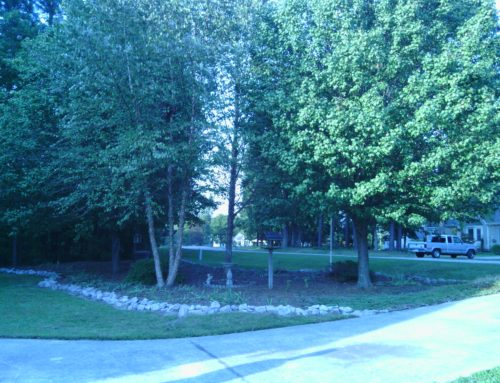 Remove trees, Create a natural area and improve your view…