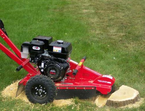 Why not to rent a stump grinder…