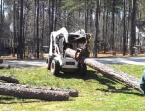 Loading 16′ logs with a Bobcat S300 Turbo…