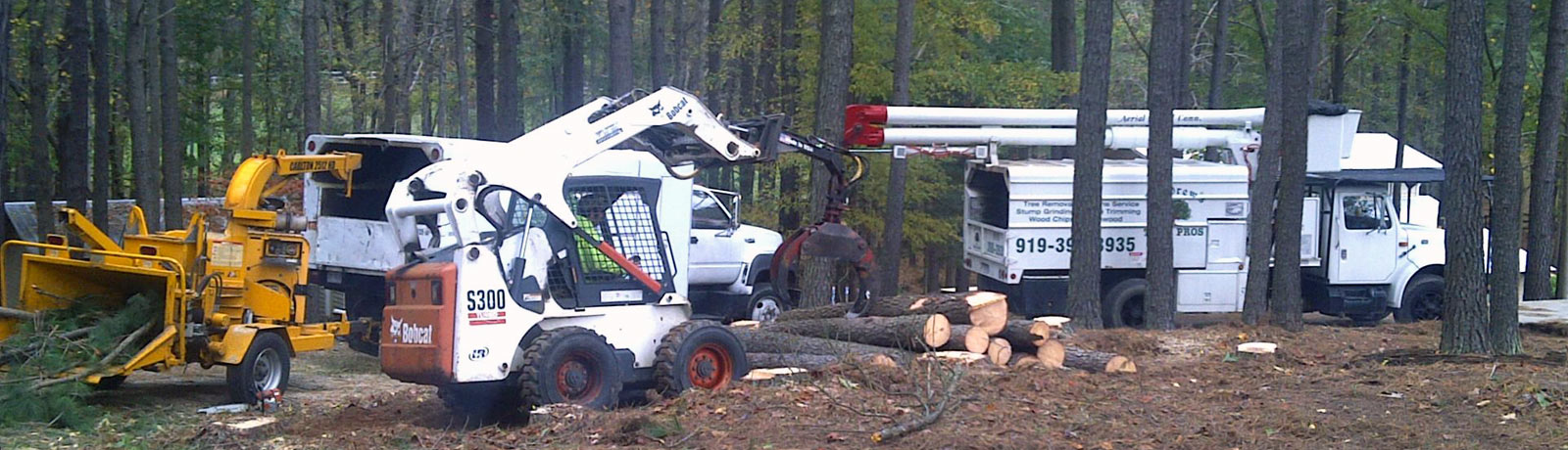 Tree Trimming & Pruning, Tree Cutting & Removal, Stump Grinding & Removal Services.